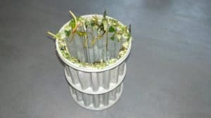 food particles on fine cylindrical filter