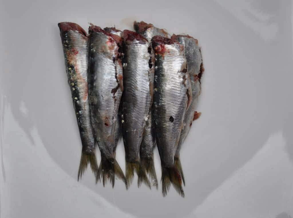 cleaned sardines deguted and head off